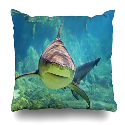 Ahawoso Throw Pillow Cover Grey Coral Approaching Shark Wildlife Nature Reef Aquarium Australia Scuba Diving Design Decor Zippered Cushion Case 20