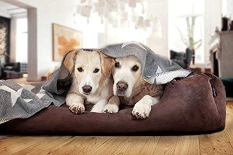 tierlando Articulos ortopedicos Cama para perro PLUTO Orto VISCO Espuma viscoelástica de suave Terciopelo Talla L 100x80cm MARRÓN PLV4-01: Amazon.es: ...