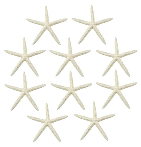 "Starfish, 10 Extra Large White Finger  Starfish 8-10"" inches"