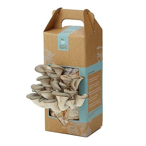 Mushroom kits and spores amazon do it yourself mushroom kit solutioingenieria Images