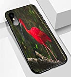 iPhone X/XS Ultra-Thin Phone case Scarlet ibis is National Bird of Trinidad and Tobago Anti-Drop Anti-Slip Soft Convenient Protective Shell
