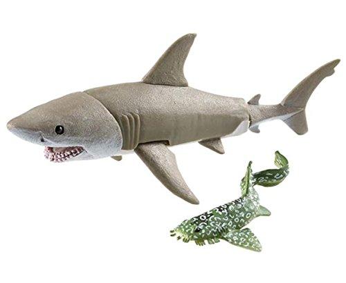 zebra shark - 7