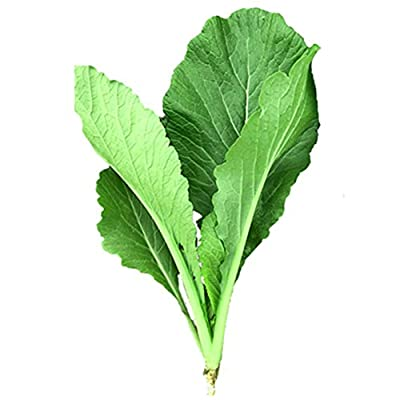 Pak Choi Seeds, 3000Pcs Pak Choi Chinese Cabbage Seeds Nutritious Garden Yard Vegetable Plant - Pak Choi Seeds by Angel3292 : Garden & Outdoor