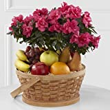 Encircling Grace Fruit & Plant Basket - Fresh Flowers Hand Delivered in Albuquerque Area