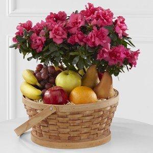 Encircling Grace Fruit & Plant Basket - Fresh Flowers Hand Delivered in Albuquerque Area
