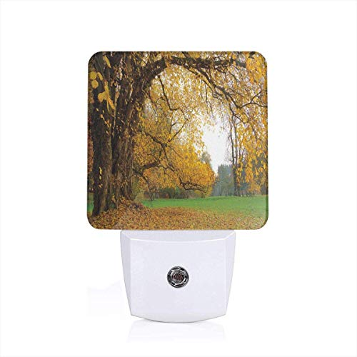 Oak Tree Deciduous Leaves Plug-in Motion Sensor
