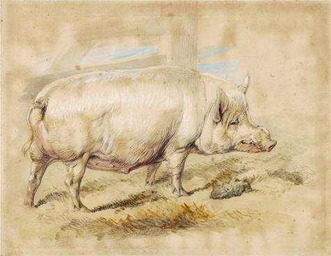 Oil Painting 'Sir Edwin Landseer,A Sow,1820', 18 x 23 inch / 46 x 59 cm , on High Definition HD canvas prints is for Gifts And Garage, Kitchen And Living Room Decoration, art printing
