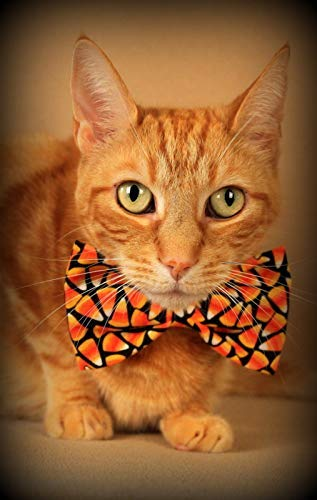 Funny Blank Halloween Cat Greeting Cards/Invitations (set of 3)]()