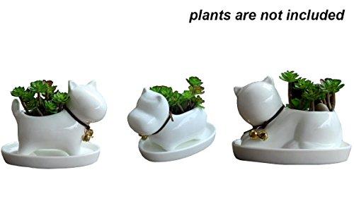 Everyday Better Life 3 PCS Set Cute Animal Cat Dog Hippo Shaped Ceramic Cartoon Home Garden Decoration Succulent Cactus Flower Pot/Plant Pots/Planter/Container