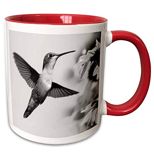 3dRose Stamp City - birds - A black and white photograph of a female Ruby-throated Hummingbird. - 15oz Two-Tone Red Mug (mug_289783_10)
