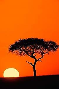 Adam Jones / DanitaDelimont – Single Acacia tree at sunrise Masai Mara Kenya Photo Print (58,70 x 88,06 cm)
