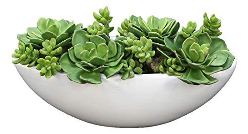 Distinctive Designs Succulents, Hen and Chickens in White Oval Ceramic Planter ()