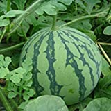 10PCS Green Watermelon Seeds Vegetable Organic Home Garden New Variety Plant