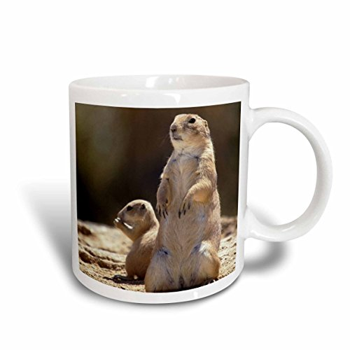 3dRose Black Tailed Prairie Dog Wildlife, Arizona, John and Lisa Merrill, Ceramic Mug, - Rose Cup Prairie