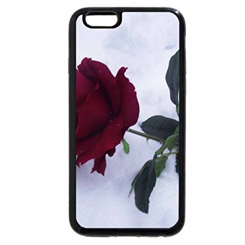iPhone 6S / iPhone 6 Case (Black) rose in the snow