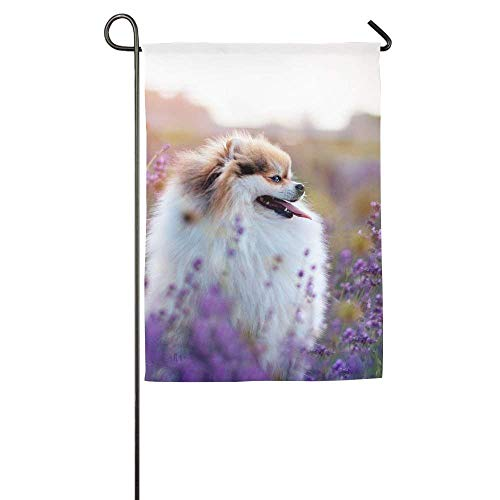 HUVATT Beautiful Dog Garden Garden Flag Indoor & Outdoor Decorative Flags for Parade Sports Game Family Party Wall Banner 12 x 18 inch