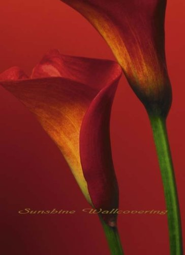 (72x100) Red Calla Lilies Huge Wall Mural Art by Illusions Photo Wall