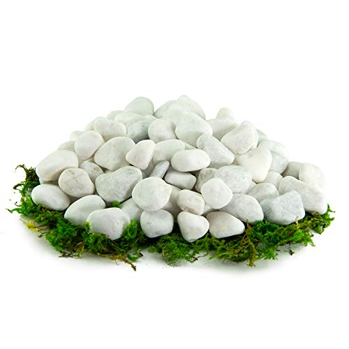Southwest Boulder & Stone Porcelain Pebbles | 20 Pounds | Natural, White Pebbles for Potted Plants, Gardening, Succulents, Aquariums, Terrariums, and More (1/2 Inch - 1 Inch) (Planters Stone Garden)