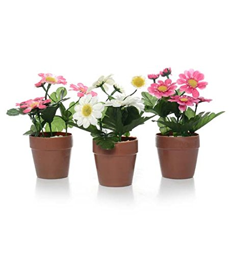 DollarItemDirect Zinnia Plant x 6F on Potted, 2.75 x 2.75 inches, Case of 24