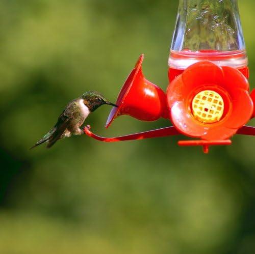 Epoch Hummingbirds 3 pc