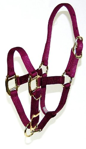 Quality Horse Halter - 4