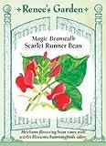 Runner Bean - Magic Beanstalk Seeds
