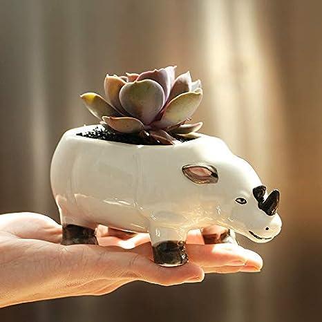 Rhino Succulent Flower Pot