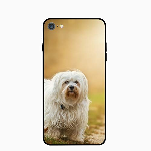 (Adorable Yorkie Dog iPhone 6S Case for Girls,iPhone 6 Case,Hard PC Case Anti Slip Protective Cover for iPhone 6/6S)
