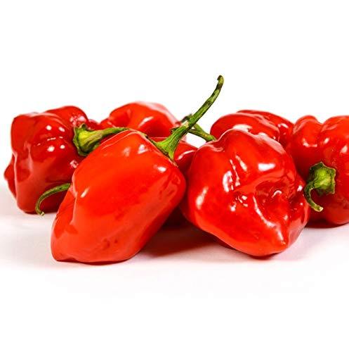 Red Habanero Seeds Heirloom Caribbean Hot Chili Pepper bin70 (15 Seeds)