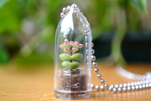Babys Necklace Succulent Necklace Terrarium
