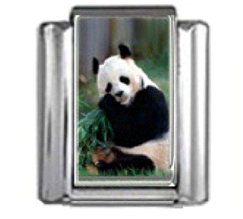 Stylysh Charms Panda Bear Animal Photo Italian 9mm Link (Bear Animal Italian Charm)