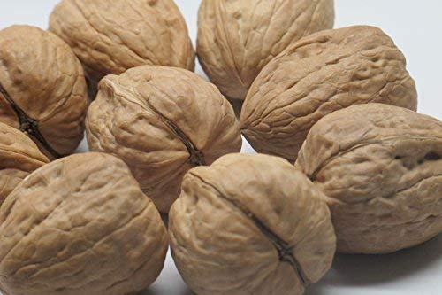 Walnuts,''Current new crop'' Jumbo In shell (10 lbs.) by Presto Sales by Presto Sales