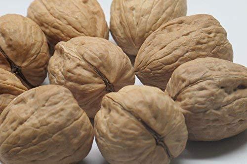 walnuts bulk in shell buyer's guide