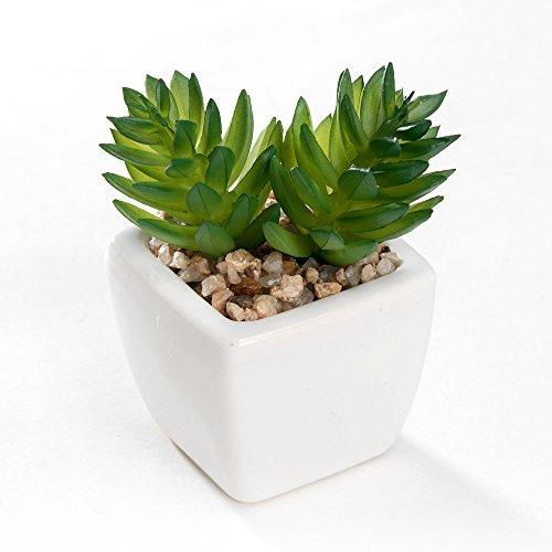 Nattol Small Artificial Succulent Plant Potted in White Ceramic Pots for Home Decor, Set of 4 6