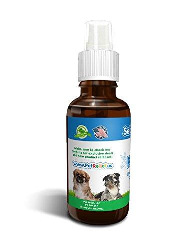 Natural Seizure Medication For Dogs