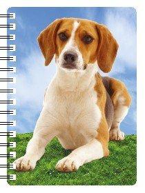 "Perro Beagle regalo – bolso de mano/tamaño de bolsillo portátil aprox. 6 """