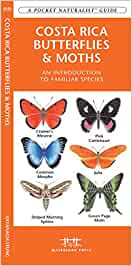 Costa Rica Butterflies & Moths: A Folding Pocket Guide to Familiar Species (Pocket Naturalist Guide Series) [Idioma Inglés]