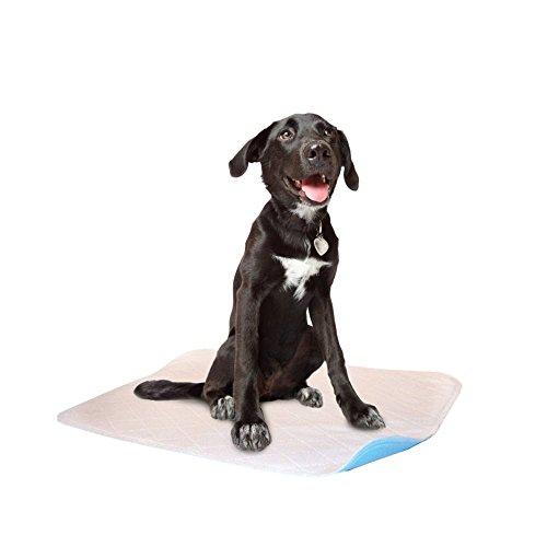Reusable Housebreaking Pad (LennyPads Ultra Absorbent, Reusable, Training, Housebreaking and Travel Washable Pee Pads - 6 Pack (48X48, White) Jumbo Pad)