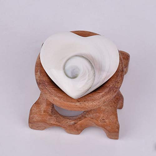 - World's Natural Treasures - Operculum Shiva Shell Pacific Cat's Eye Heart