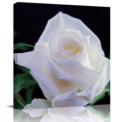 SUN-Shine Canvas Wall Art Oil Painting Prints Stretched and Framed, White Rose Close-Up On Black Background Wall Artworks Picture for Living Room Kitchen Bedroom Decoration, 16X16Inch -