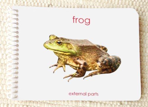 Frog External Parts Book External Anatomy Of The Amphibian