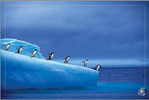 Courage - Antarctic Penguins Save our Planet 36x24 Art Print