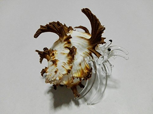 Cracker Jack Box Costume (Rare item Nice glass blowing Hermit Giant crab natural seashell (Conch) : (M$M shop) Brown)