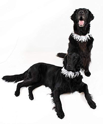 Midlee Wedding Pearl Bead Dog Collar (Large) ()