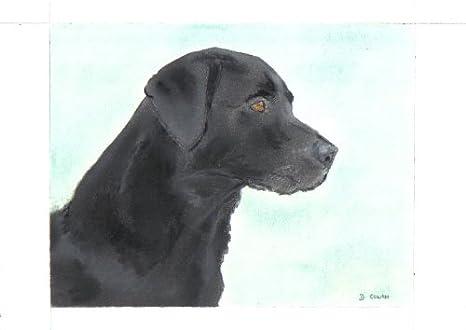 Edad Negro de perro Labrador - Vista lateral - tiza Pastel dibujo: Amazon.es: Hogar