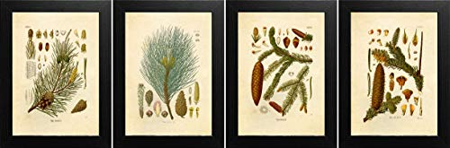 (Ink Inc. Evergreen Trees Botanical Prints Vintage Wall Art Drawing, Set of 4, 8x10, Unframed)