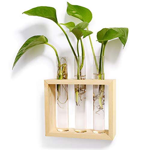 (Mkono Wall Hanging Test Tube Planter Modern Flower Bud Vase with Wood Stand Tabletop Glass Terrarium for Propagating Hydroponics Plants, Home Office Decoration)