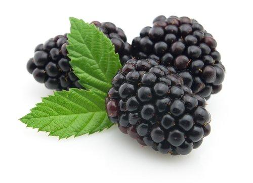 Blackberry Amber Premium Fragrance Oil, 4 Oz. Bottle The Candlemaker' s Store