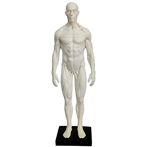 11.8 inch Male Human Muscle Model Statue Artist Sculpture Character Figurine Office Desktop Ornament (White) by huaci
