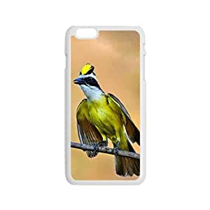 The Colorful Bird Can Sing Hight Quality Plastic Case for Iphone 6
